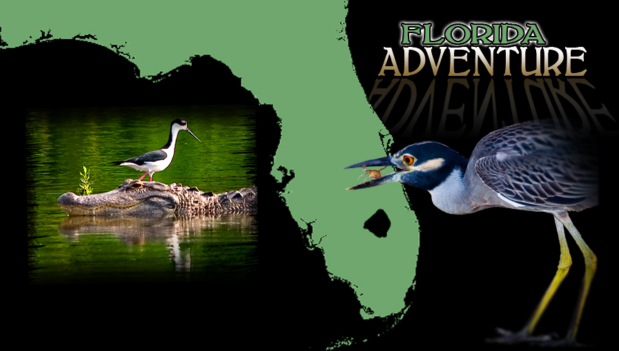 Florida Nature Photography Workshops