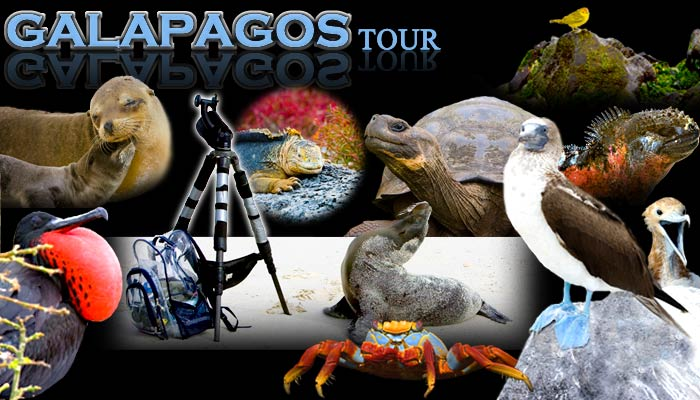 Galapagos Photography Workshop